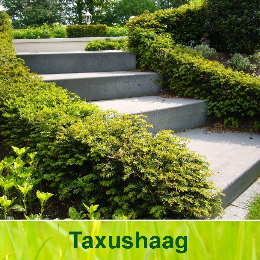 Planten aanbieding - Kwekerij Online Planten folder aanbiedingen op trefwoord